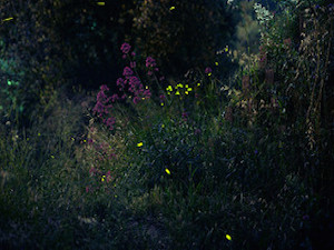 Foto: Marion Schreiber fireflies III via photopin (license)