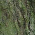IMG_0570 - Kopie